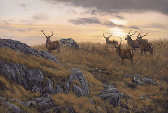 red-deer-stags_sunset_540